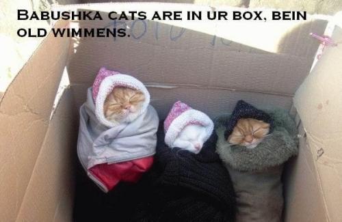 Monorail Cat Meme