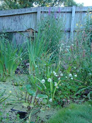 Frog end wildlife native plants for Native pond plants