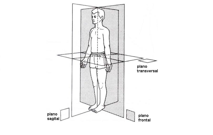 Biologíapuntocom: Planos y secciones del cuerpo humano