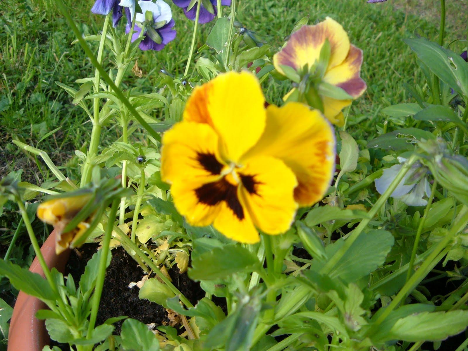 Vanliga blommor i trädgården