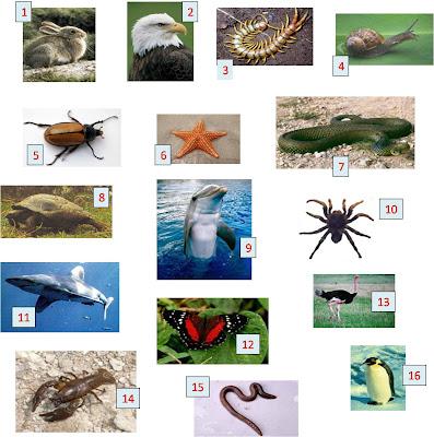 clasificacion de los animales. Clasificar animales