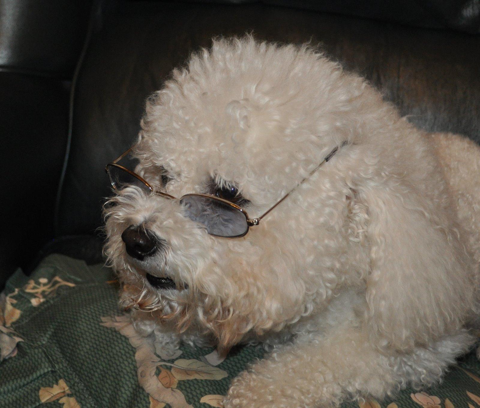 Dog Jealousy Good Girl Uni Lad