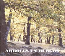 Árboles en Burgos