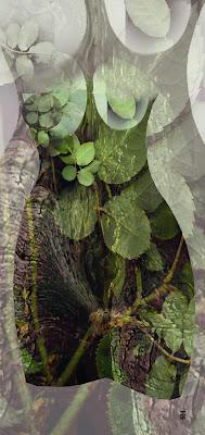 Elementos Naturales II, de Salvador Manzanera