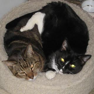 Cosmo and Tsu cuddle up