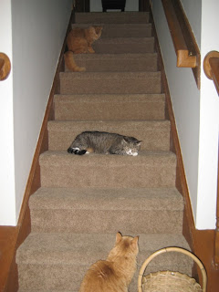 Squiggy is the queen of the stairs