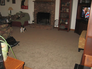 new carpet in the living room - Squiggy on the red chair