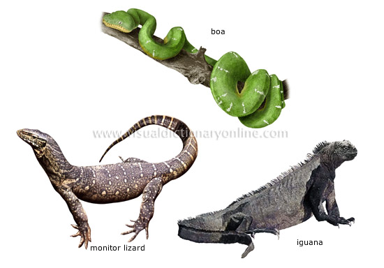 Biologia - Animales 10 Examples Of Reptiles