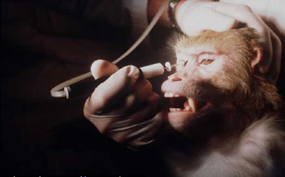 an analysis of animal experimentation Animal's sentience, ability to feel pain and ethical basis of arguments for animal-testing debates on animal experimentation often focus on the capability of animals to be sentient and to feel pain as proofs.
