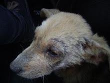 Olga, la mascota oficial