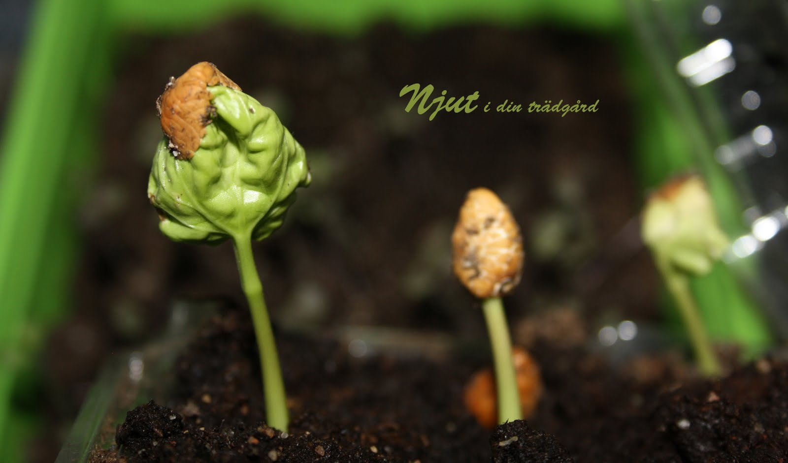 Njut i din trädgård: april 2010
