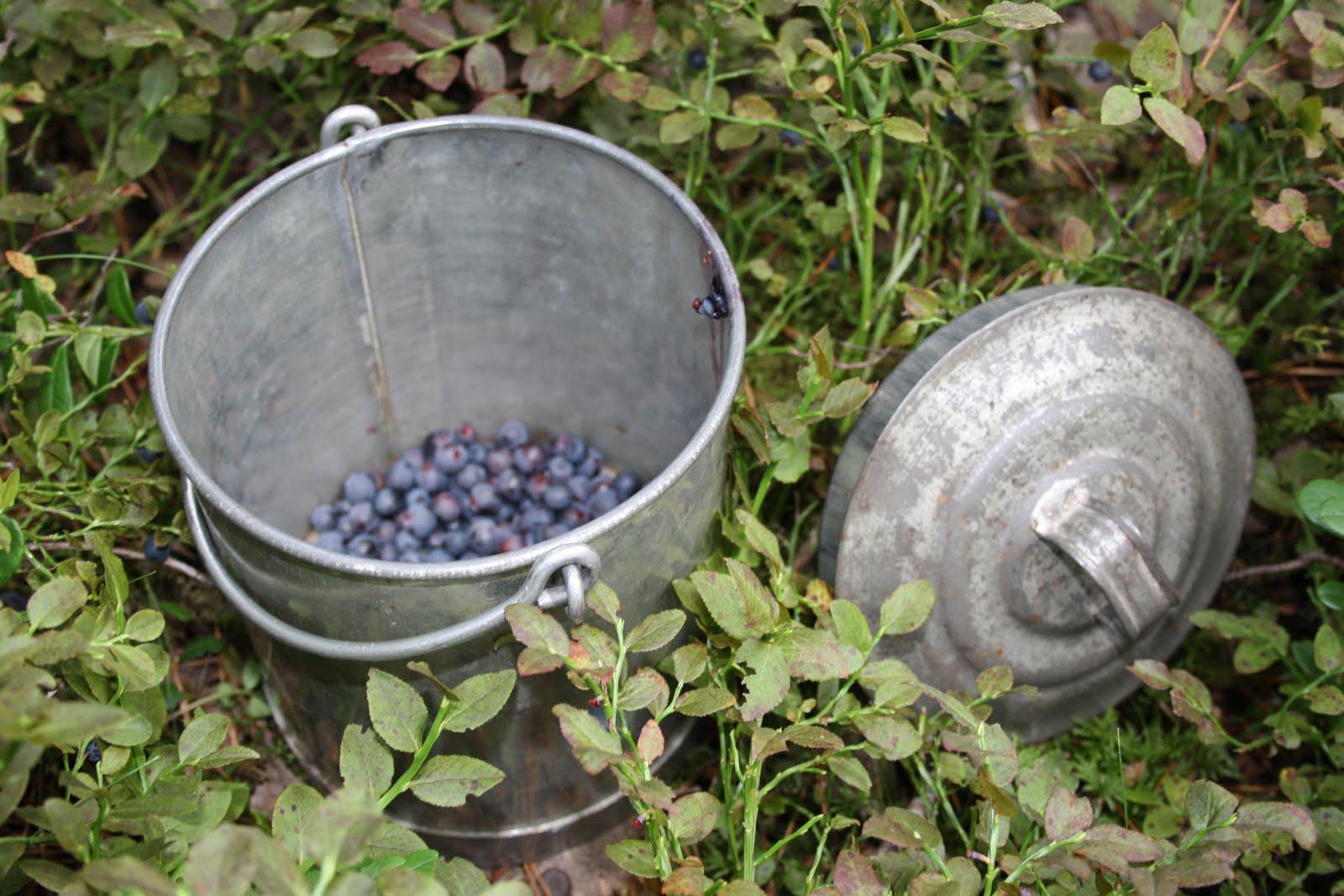 Njut i din trädgård: augusti 2010