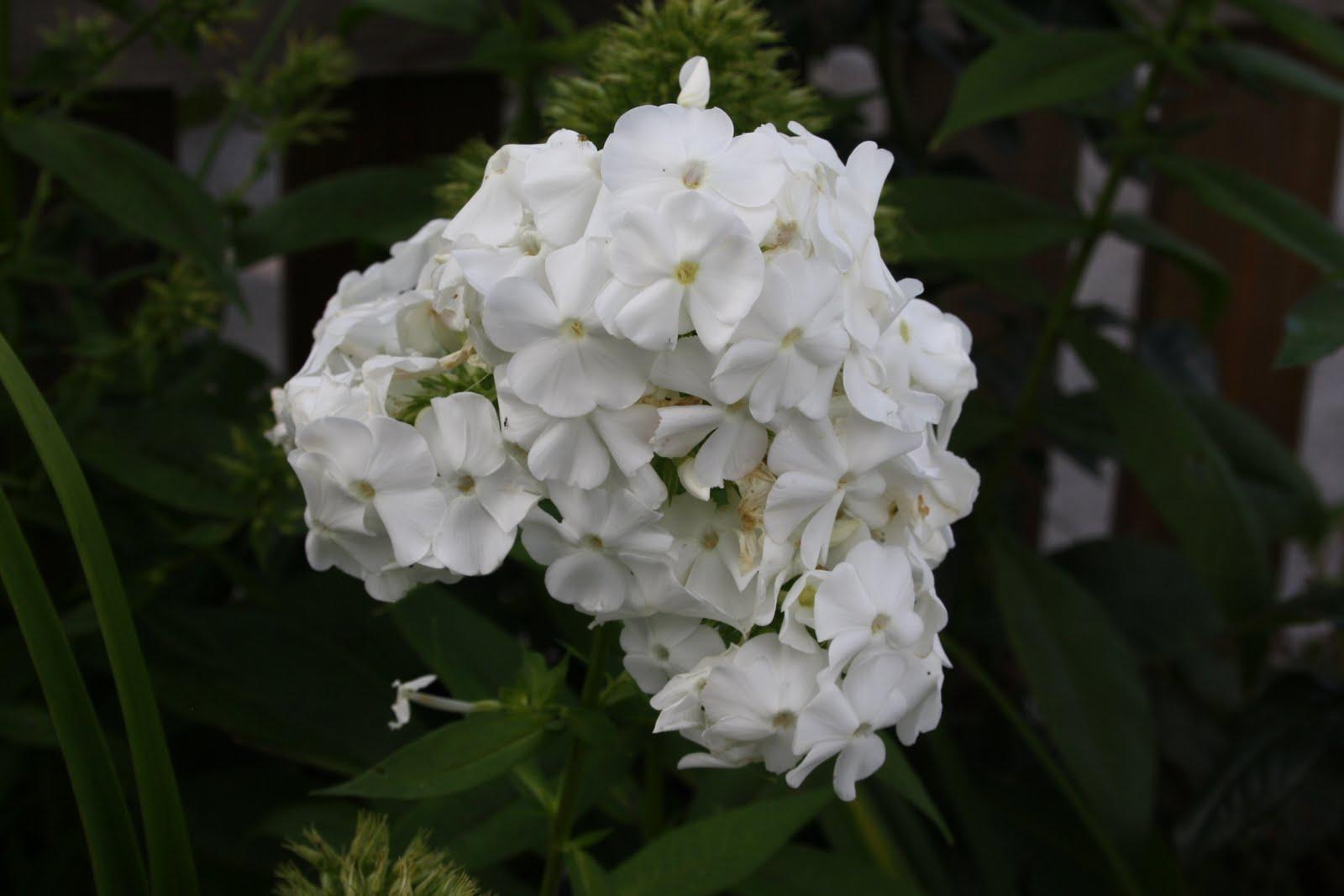 Njut i din trädgård: september 2010
