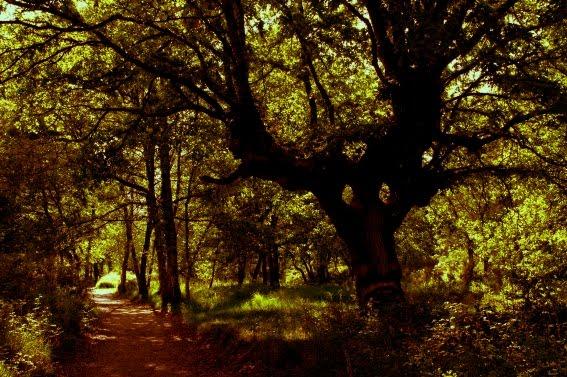 El Bosque Encantado
