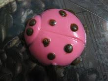 Ini lollichoc seekor kumbang