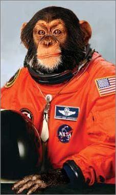 monkey_astronaut.jpg