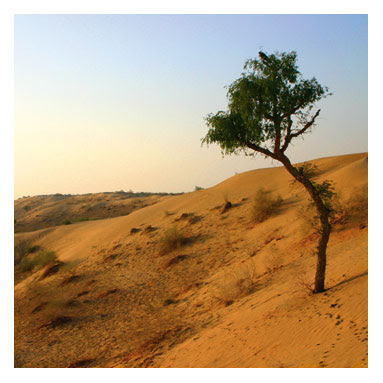 Snowcem Paints: India's Thar desert growing fast