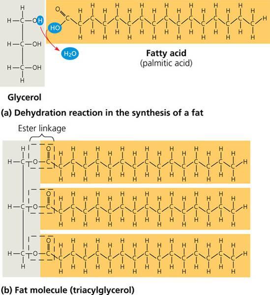 Building Blocks Of Fats Oils