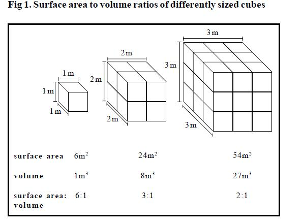 Osmosis and Surface Area/Volume Relationships – Medium