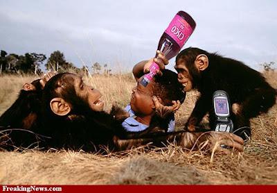 Monkey-Cell-Phone-23287.jpg