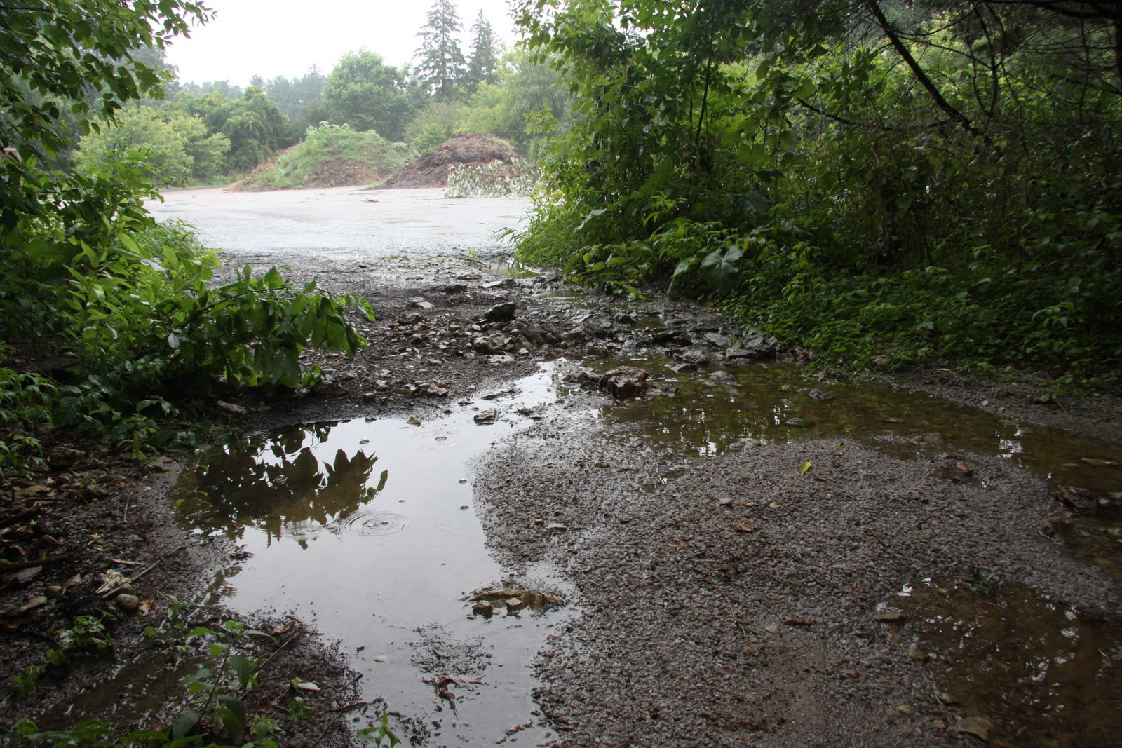 Save Our Stream Sediment Problems At Forest Hills Cemetery