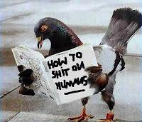 cacche di colombo