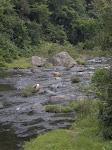 Rios caudalosos