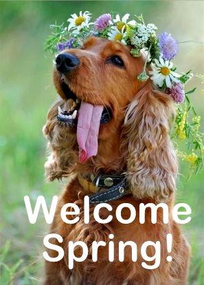 Spring Dog
