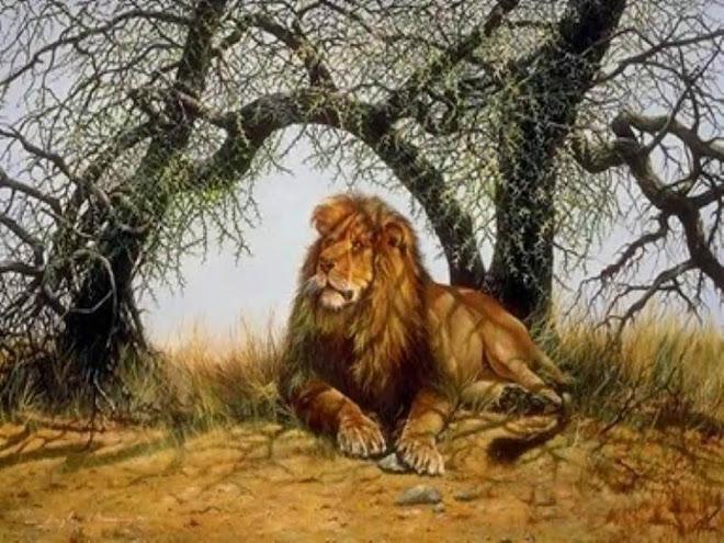 leones en la sabana
