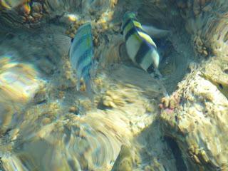 Красное море, рыбки. Египет, Хургада
