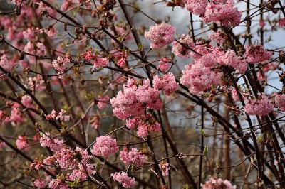 Regent+Park+spring+bloom+flowers