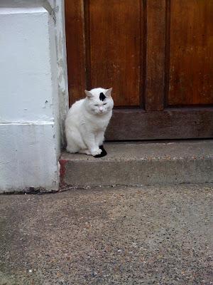 cat+in+waiting