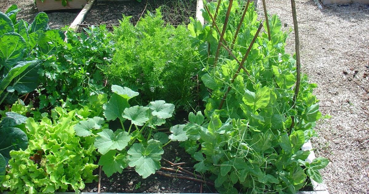 On verra au jardin petit tour au potager - Petit jardin culinary arts tours ...