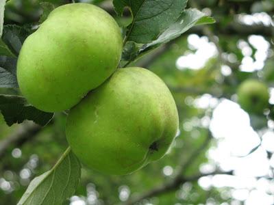 La recette des Pâtes de Fruits aux Pommes