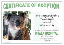 Adopt a wild koala!