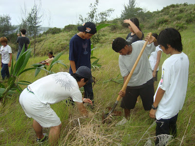 laulau revegetation saipan