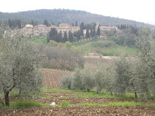 Olive Groves