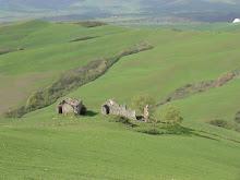 Farm Ruins