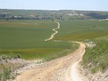 Homilos del Camino