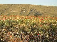 Landscape of Castrojeriz
