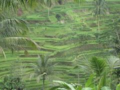 טרסות אורז והרים מדהימים הצפון....