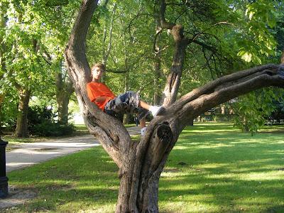Blogul lui Joker:Copaci asemenea bonsailor pe Insula Maergareat