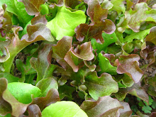Baby Spring Greens Mix