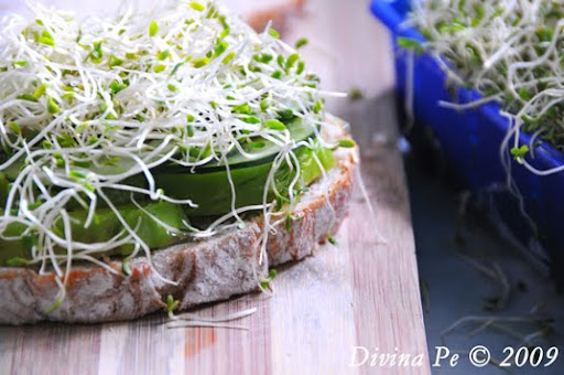 Avocado And Sprout Club Sandwich Recipes — Dishmaps