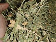 Alfalfa Hay Compress