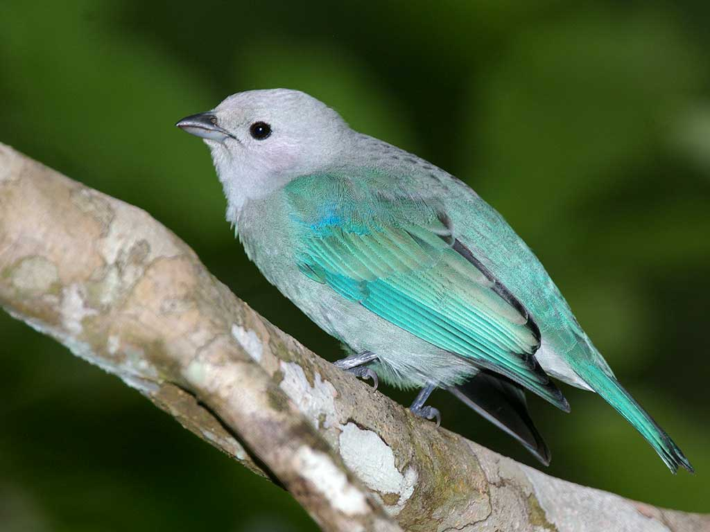 http://1.bp.blogspot.com/_i1EhHAR8ahM/S9m8gRZAsTI/AAAAAAAABrQ/9wXHuIdsHk4/s1600/bird-1-wallpaper-1024x768-853745.jpeg