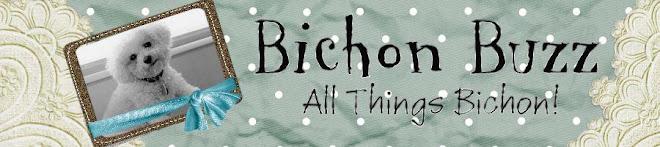 Bichon Buzz