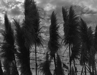 usflag-storm-invasive-plant