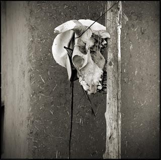Hanging Skull at Taos Pueblo - New Mexico - Brandon Allen Photography