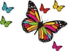 Resultado de imagem para borboletas de muitas cores lavadeiras e passarinhos
